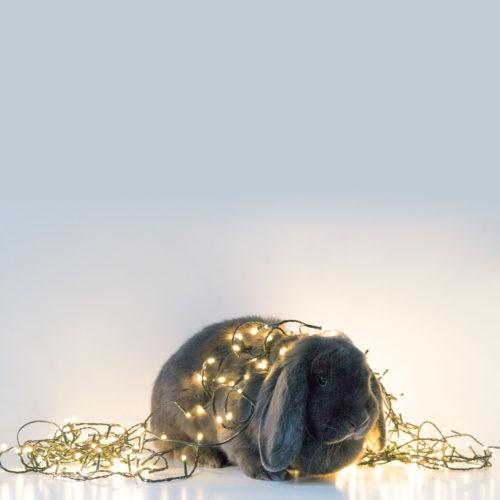 inteRom-kerstkaart